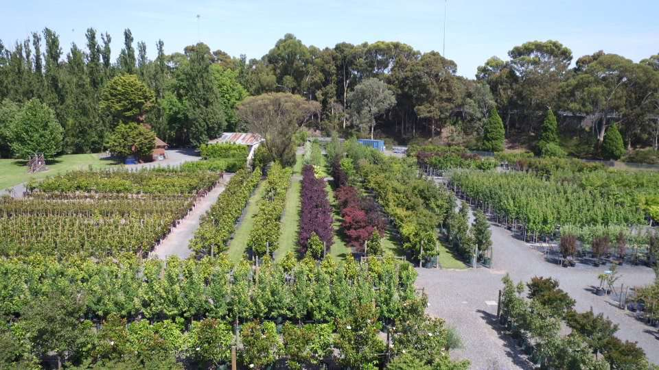 Wholesale Nursery Melbourne - Wholesale Trees & Plants Kew