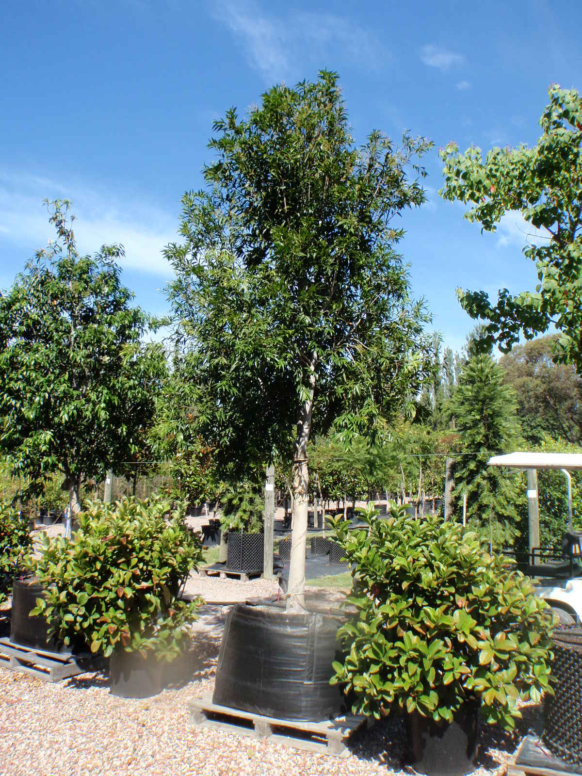 plants and trees wholesale