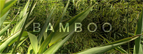 melbourne bamboo plants
