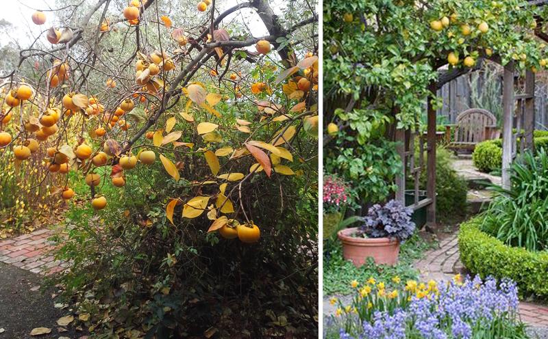 Wild Citrus Garden Inspiration