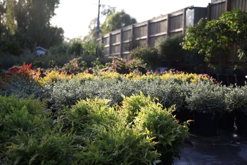 What To Look For When Buying Plants At A Wholesale Nursery