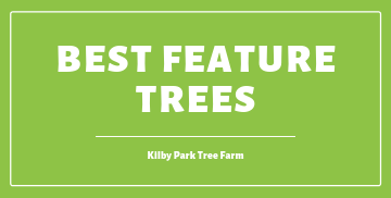 6 Best Feature Trees of 2020