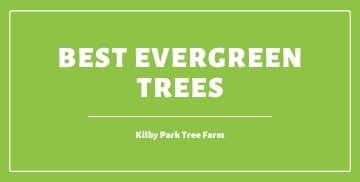 Best Evergreen Trees of 2020