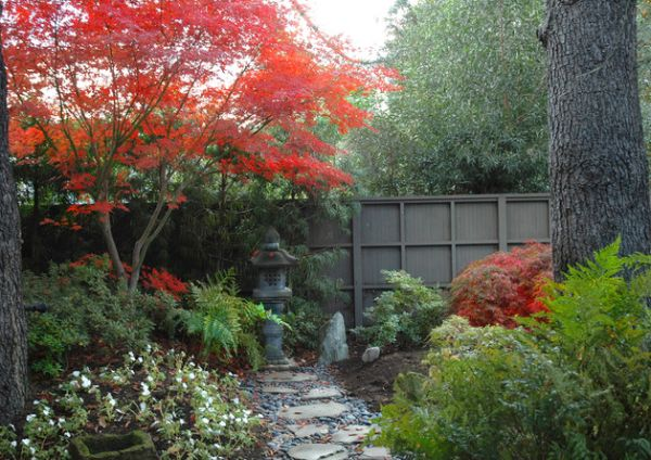 Fiery-Japanese-Maple-in-the-garden-offer-a-tasteful-and-colorful-contrast-to-the-green-monotony