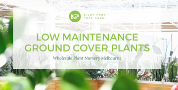 Low Maintenance Ground Cover Plants