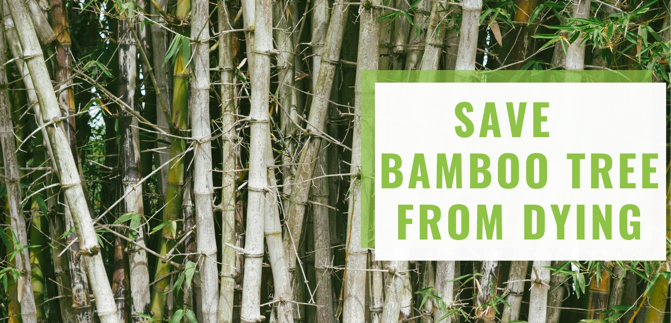 save bamboo tree