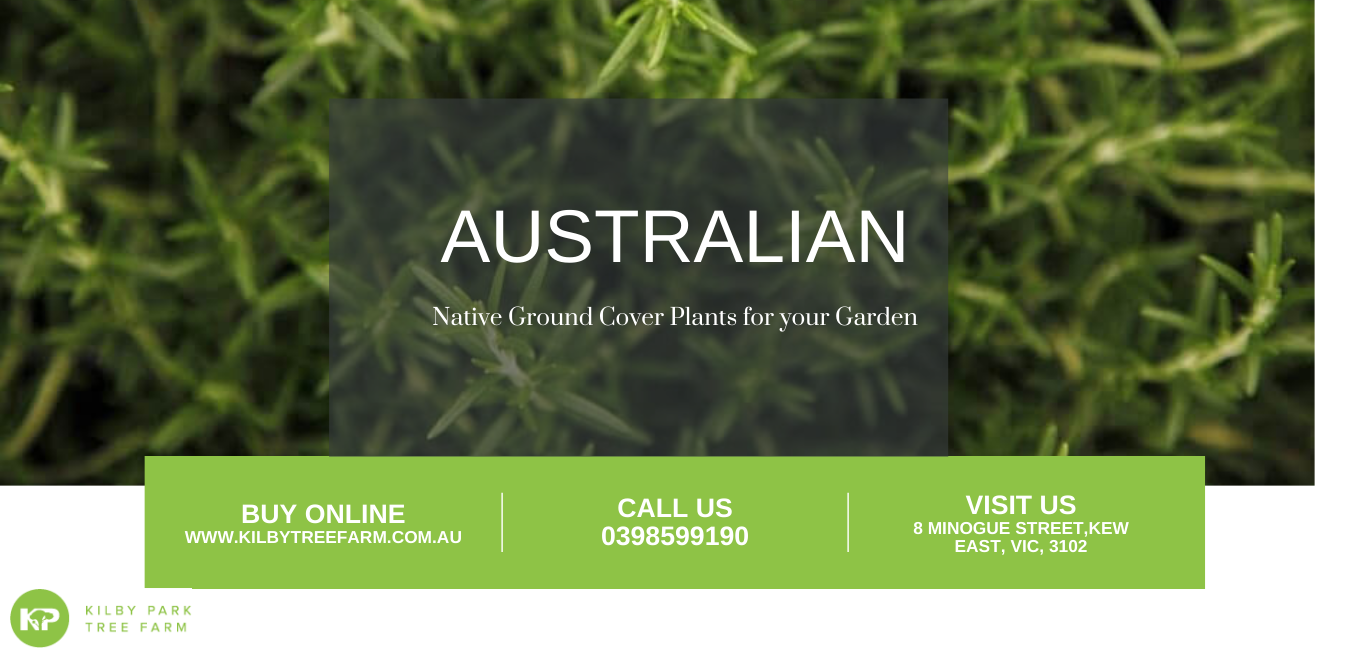 Australian native ground cover plants